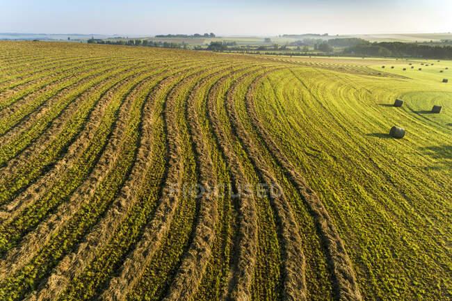 Vue aérienne des lignes de récolte incurvées dans un champ coupé avec balles de foin, à l'ouest de Calgary ; Alberta, Canada — Photo de stock