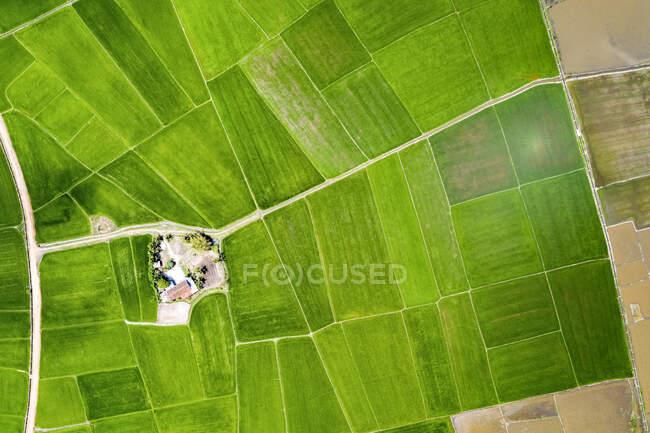 Drone vista de verde brilhante, campos de arroz exuberante; Ha Giang Province, Vietnã — Fotografia de Stock