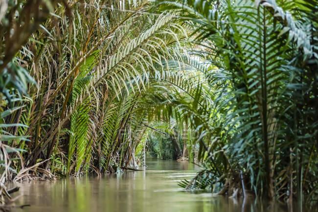 Ruhiger Mekong, gesäumt von sattgrünen Palmenwedeln, Mekong-Delta; Vietnam — Stockfoto