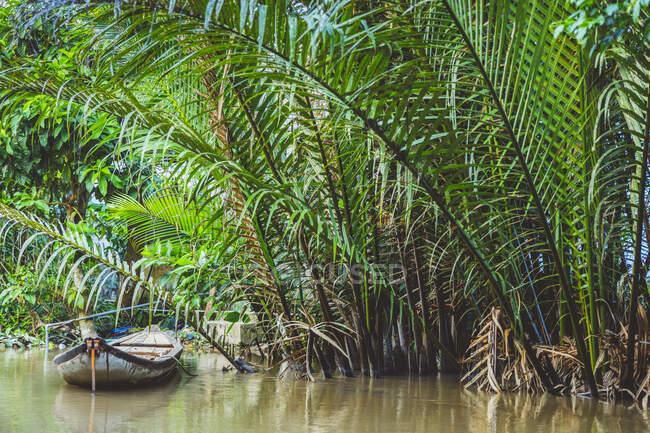 Лодка в реке вдоль берега с пышными листьями, дельта реки Меконг; Вьетнам — стоковое фото