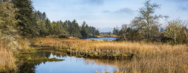 Wetland plants grow along the Netul River Estuary at Lewis and Clark National Historical Park; Oregon, United States of America — Stock Photo