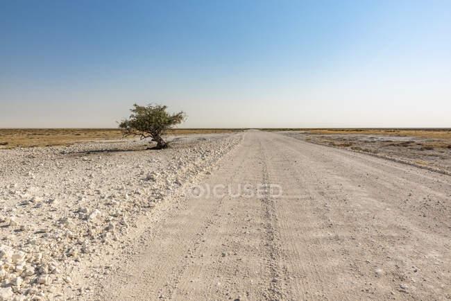 Длинная, пустая дорога, протянувшаяся вдаль, Национальный парк Этоша; Намибия — стоковое фото