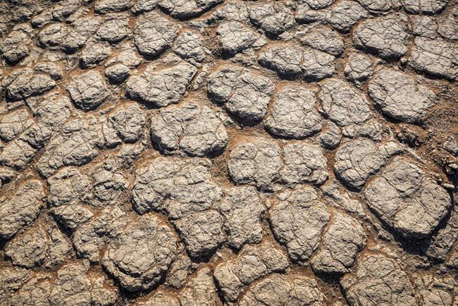 Sécheresse, Sossusvlei, désert de Namib, parc national de Namib-Naukluft ; Namibie — Photo de stock