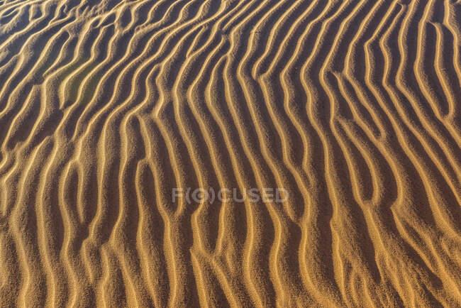 Vue panoramique du paysage mort du désert de Namib ; Namibie — Photo de stock