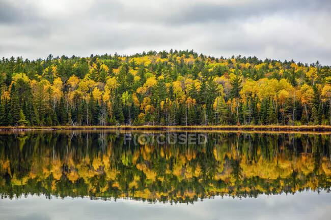 Linda reflexão de água de cores de outono ao longo do Lago Swamper. Swamper Lake está no Gunflint Trail, no norte de Minnesota; Minnesota, Estados Unidos da América — Fotografia de Stock