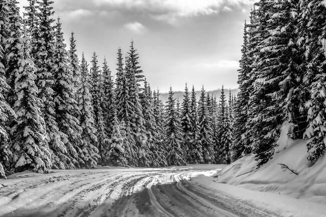 Черно-белое изображение заснеженной дороги и леса в горах Роки; Британская Колумбия, Канада — стоковое фото