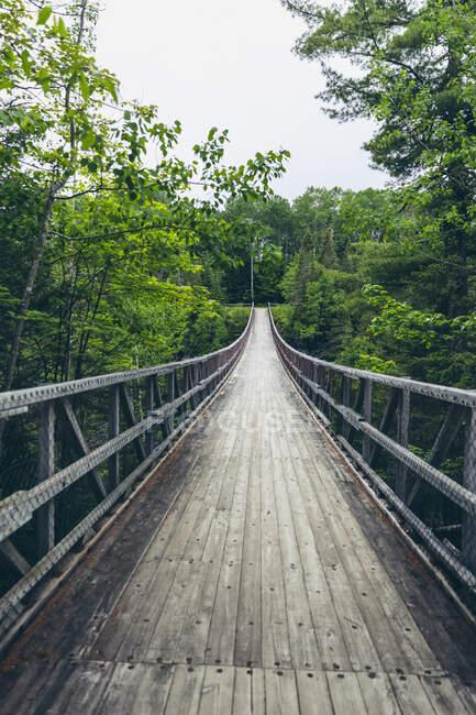 Пышные зеленые деревья, выстилающие тропу в Каньоне Порт-де-л 'Энфер; Сен-Нарцисс-де-Римуски, Квебек, Канада — стоковое фото