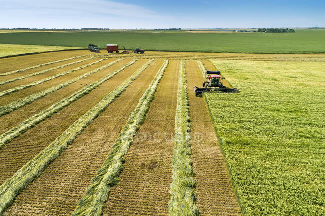 Swather cutting a barley field with graphic harvest lines; Beiseker, Alberta, Canada — Stock Photo