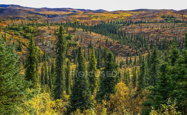 Rolling hillsides of autumn tundra, Denali National Park and Preserve; Alaska, United States of America — Stock Photo