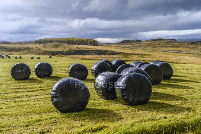 Bales de feno redondo envolto em polipropileno preto; Fljotsdalsherad, Região Leste, Islândia — Fotografia de Stock