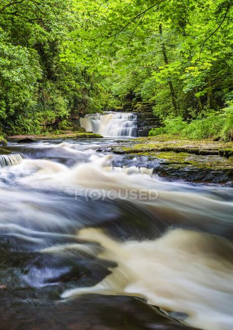 Rio em uma floresta com uma cachoeira no verão, exposição longa; Clare Glens, County Tipperary, Irlanda — Fotografia de Stock