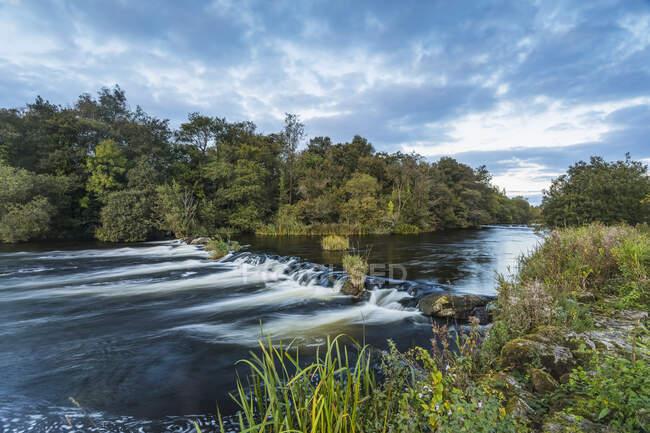 Pequeña cascada en el río Shannon fuera de Castleconnell con un pequeño bosque en el fondo; Castleconnell, Limerick, Irlanda - foto de stock