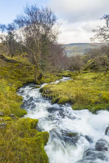 Быстрый ручей каскадирует через зеленый валун, окруженный деревьями; Eagles Rock, графство Лейтрим, Ирландия — стоковое фото