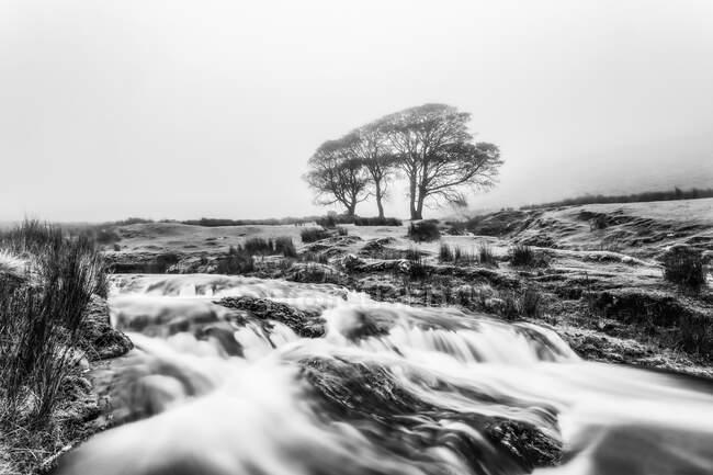 Черно-белое изображение маленькой реки с тремя деревьями на заднем плане, окутанной туманом, Галты; графство Типперэри, Ирландия — стоковое фото