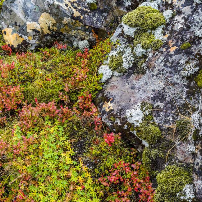 Gerduberg scogliera di dolerite, una roccia basaltica a grana di corso, situata sulla penisola occidentale Snaefellsnes; Eyja- og Miklaholtshreppur, Regione occidentale, Islanda — Foto stock