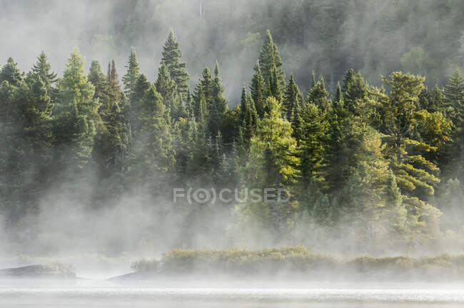 Lake and trees with morning mist; Quebec, Canada — Stock Photo