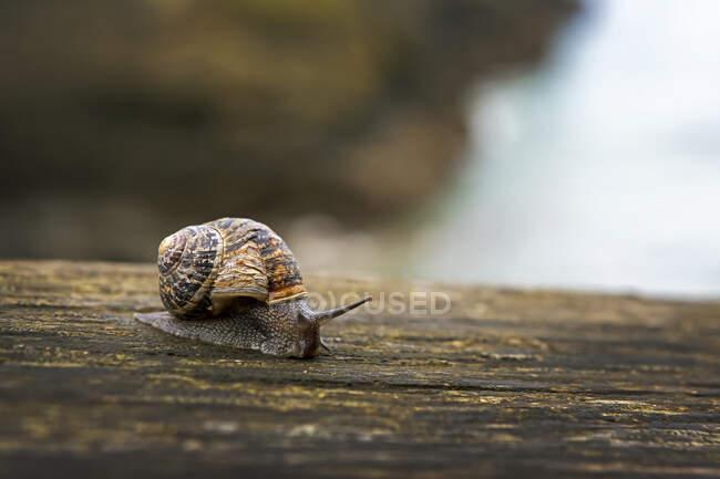 Gros plan d'un escargot sur une clôture en bois ; comté de Cornwall, Angleterre — Photo de stock