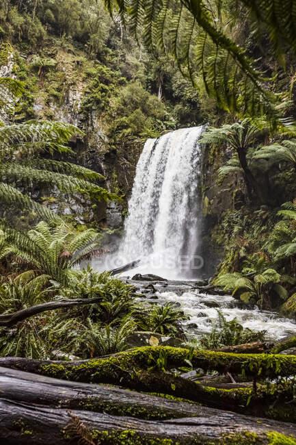 Hopetoun Falls; Beech Forest, Victoria, Australia — Stock Photo