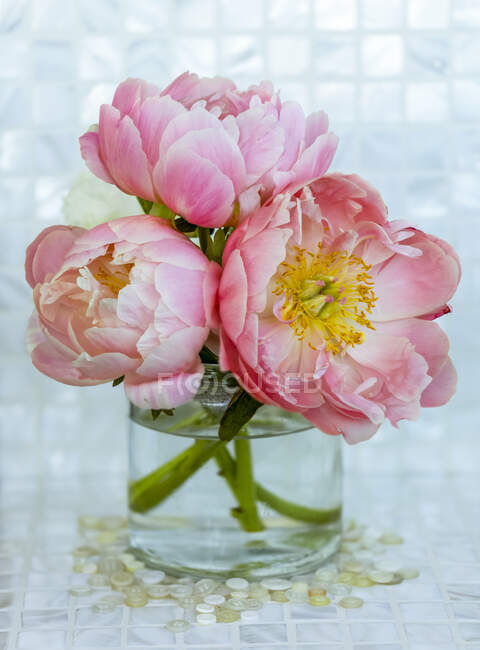 Close-up bouquet of three pink peonies (Paeonia) in a glass vase; Surrey, British Columbia, Canada — Stock Photo