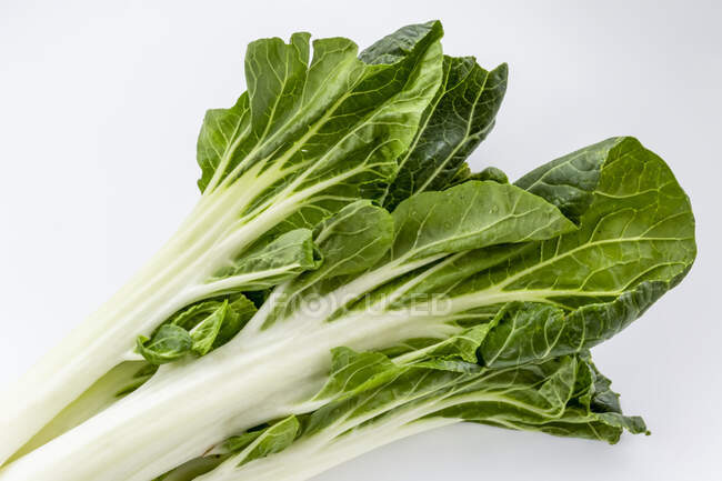 Close-up of leafy bok choy on a white background — Stock Photo
