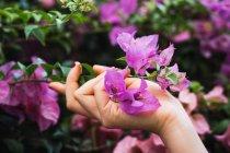 Cropped image of female hand holding flowers — Stock Photo
