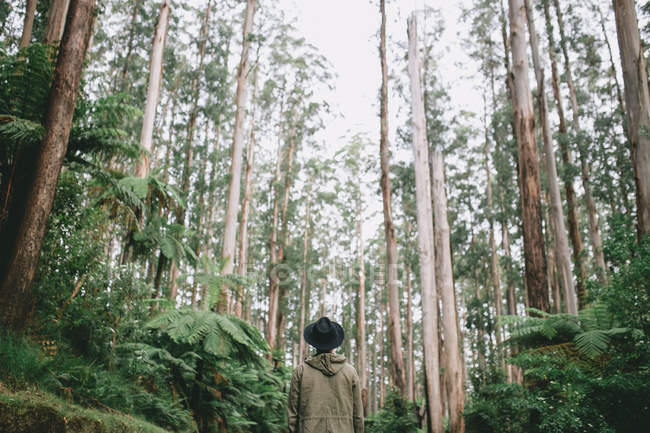 Rear view of a young man exploring Australia beautiful wilderness — Stock Photo