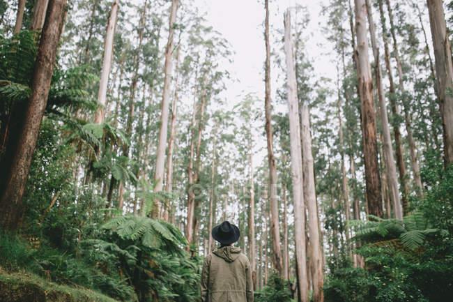 Vista traseira de um jovem a explorar o deserto lindo Austrália — Fotografia de Stock