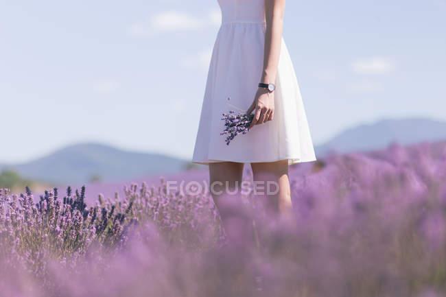 Junge Frau hält Blumen und zu Fuß durch ein Feld von lila Blüten — Stockfoto