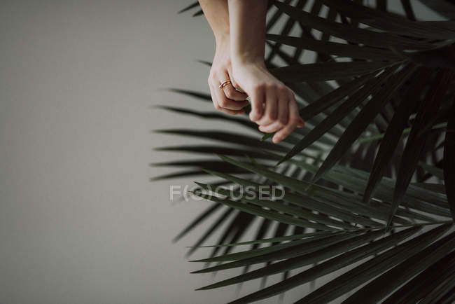 Female hands and palm leaves — Stock Photo