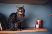 Кошка сидит на полке — стоковое фото