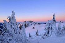 Forêt bavaroise en hiver — Photo de stock
