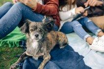 Маленькая собака смотрит в камеру — стоковое фото