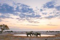 Tre elefanti ad un waterhole — Foto stock