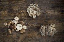 Maitake, Shitake e funghi ostrica — Foto stock