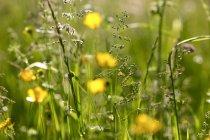 Травы на летнем лугу, макро — стоковое фото