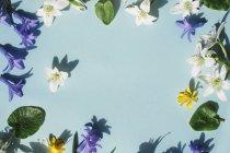 Verschiedene Blumen auf blauem Untergrund — Stockfoto