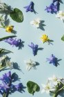 Different flowers on blue surface — Stock Photo