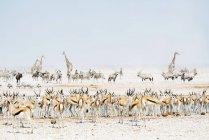 Wild animals near a waterhole — Stock Photo