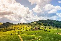 Ландшафт с виноградниками — стоковое фото