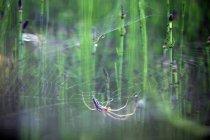 Крупным планом европейского садового паука — стоковое фото