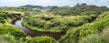 Деревья мануки на пляже Wharariki — стоковое фото