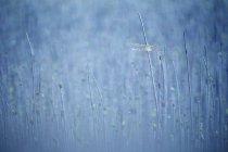 Près de quatre-spotted Chaser dans le domaine — Photo de stock