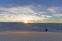Принимая фото пустыни чихуахуа — стоковое фото