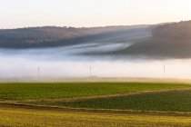 View of green grass field with fog on background, germany, tauber valley — Stock Photo