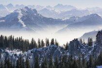 Вид на деревья и горы со снегом в дневное время — стоковое фото