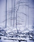 Bare trees in winter foggy forest — Stock Photo