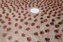 View of red flowers on ground during daytime — Stock Photo