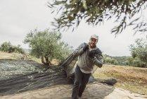 Hombre tiras chal con aceitunas del árbol de la recolección de la cosecha, Jaen, España. - foto de stock