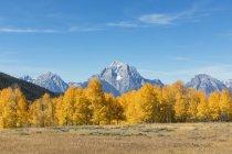 Vue des arbres sur le premier plan et les montagnes en arrière-plan, é.-u. — Photo de stock
