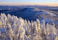 Allemagne, Bavière, Forêt bavaroise en hiver — Photo de stock